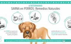 Sarna en perros: remedios naturales