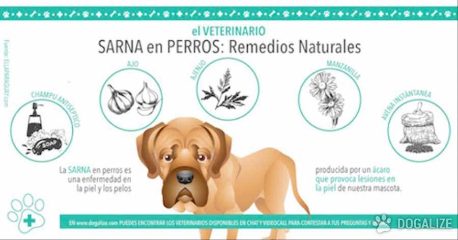 como quitar la sarna en los perros remedios caseros