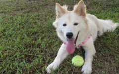 How much exercise does your dog really need?