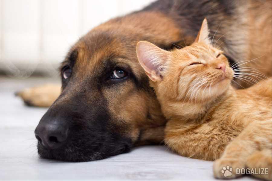 cane salva gatto