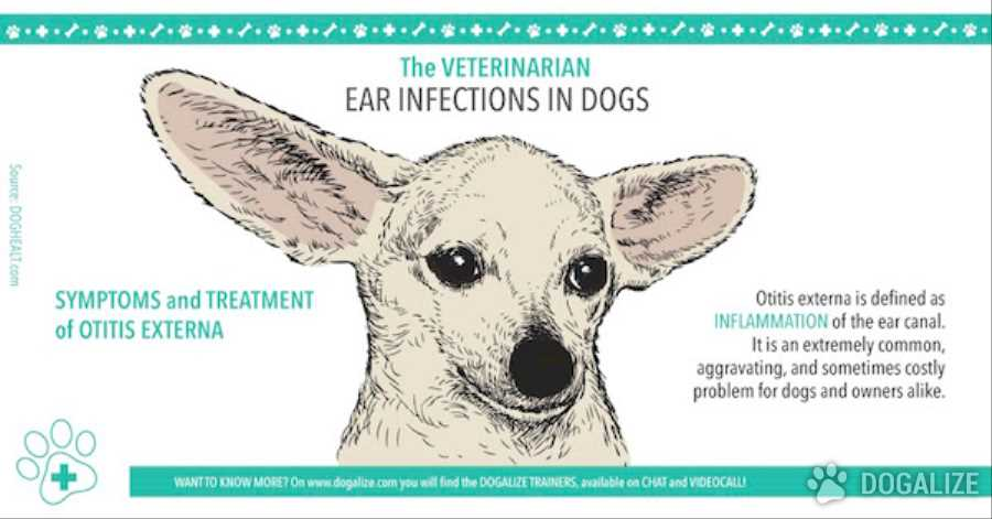 What Are Symptoms Of Ear Infection In Dogs