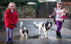cura di cani