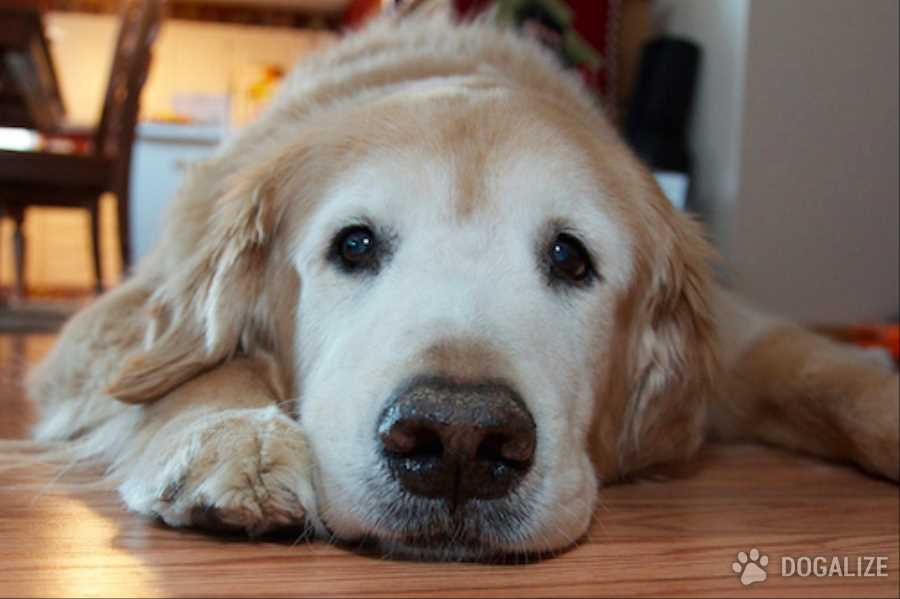 3 Ways You Are Stressing Your Dog Out