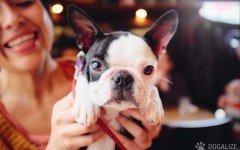 N.Y. OK dog in restaurants outdoor dining areas