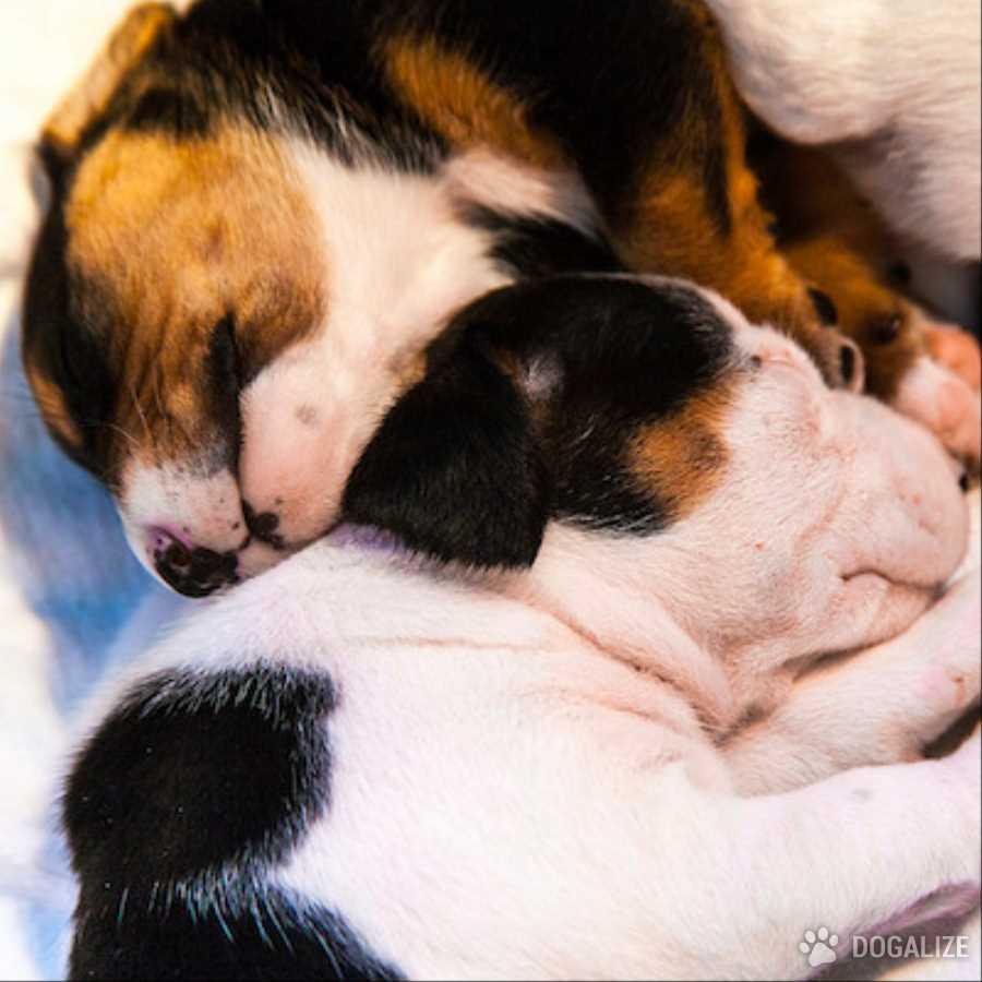 adozione cuccioli