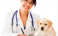 dermatite allergica da pulci in cani e gatti
