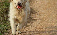 corsa per cani