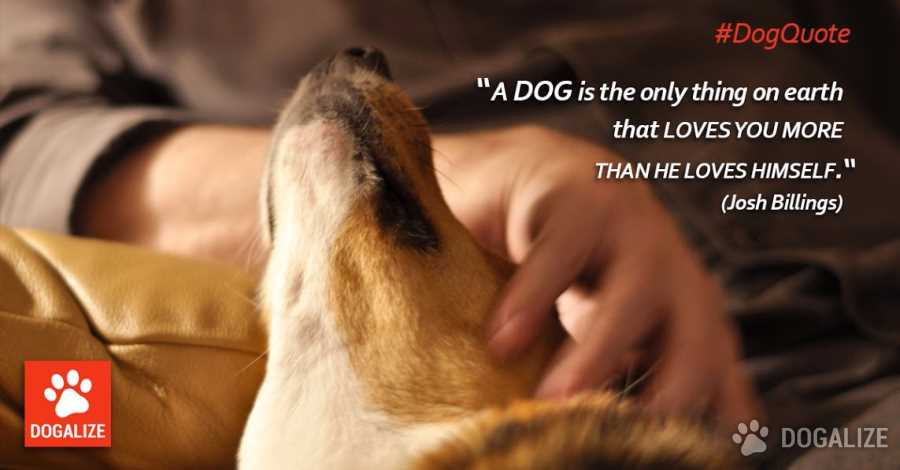 A dog loves you more than himself!