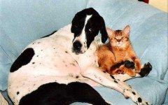 cani e gatti.jpg