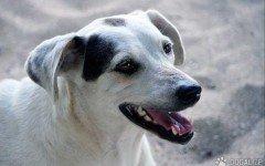 5 modi per prendersi cura del cane in modo corretto