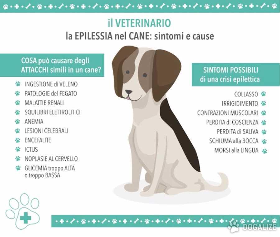 Epilessia nel cane: sintomi e cause