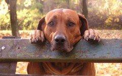 Cagnolina: cane maltrattato abbandonato