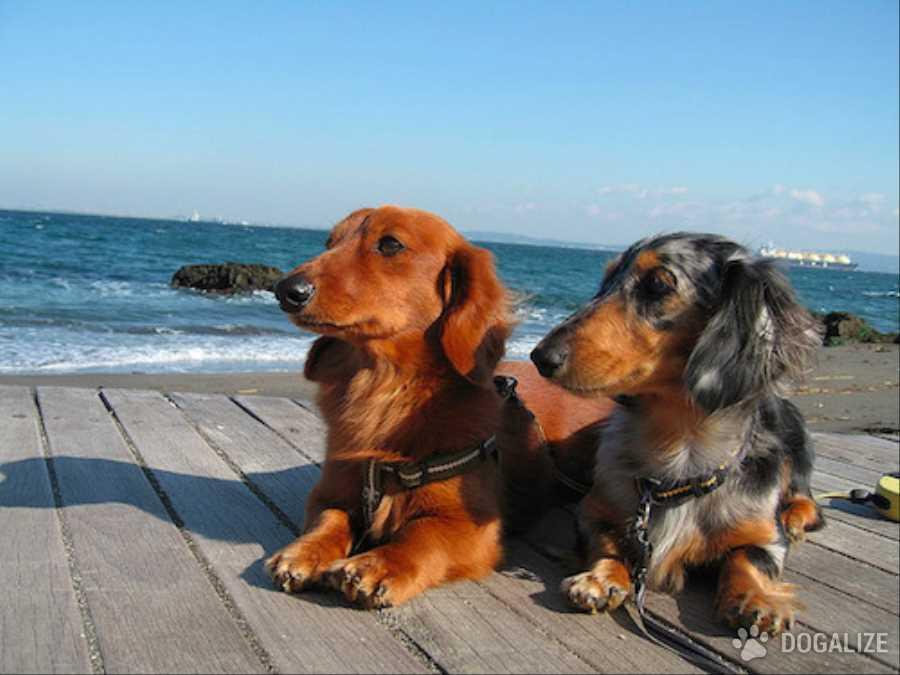 Le spiagge Petfriendly: i cani possono andare al mare