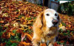 5 Ways to keep your dog healthy during the fall months