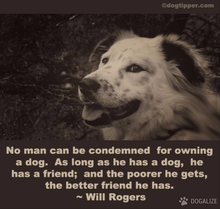 A dog is a man's best friend!