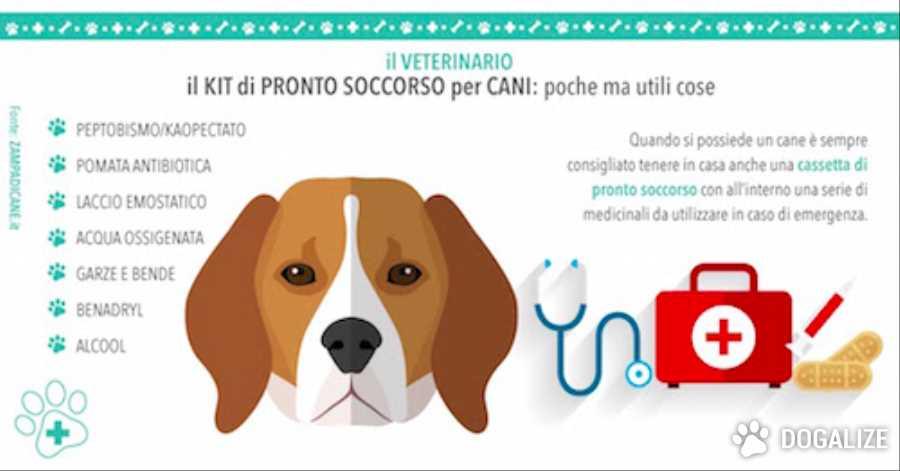 pronto soccorso per cani: Il kit di pronto soccorso per cani: poche ma utili cose