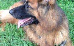 paura dei cani - cane ridona il sorriso