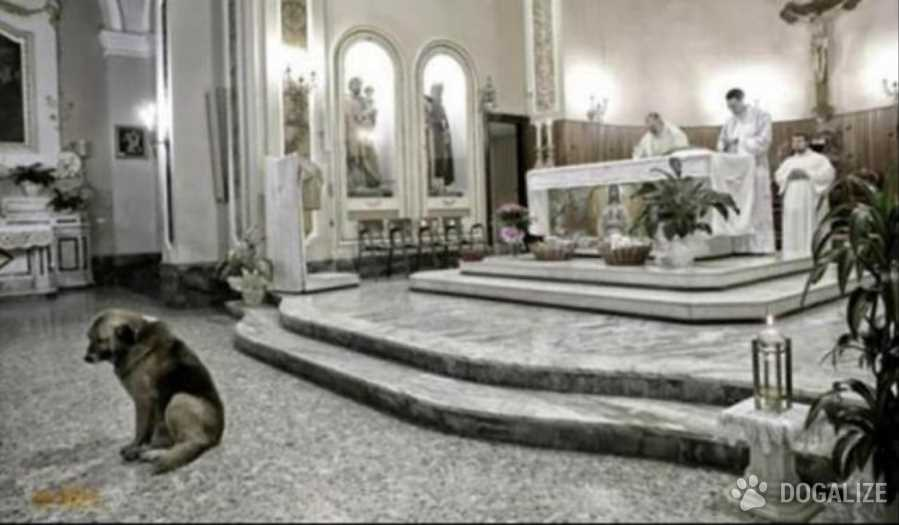 Italian dog goes to Church everyday, honoring his owner