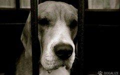 maltrattamento cani