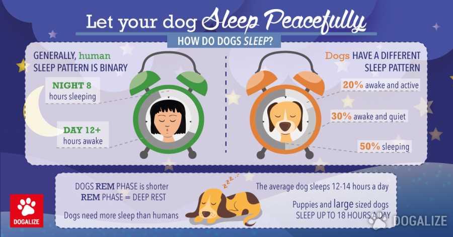 Let Your Dog Sleep Peacefully Dogalize Mesmerizing Dog Sleep Pattern