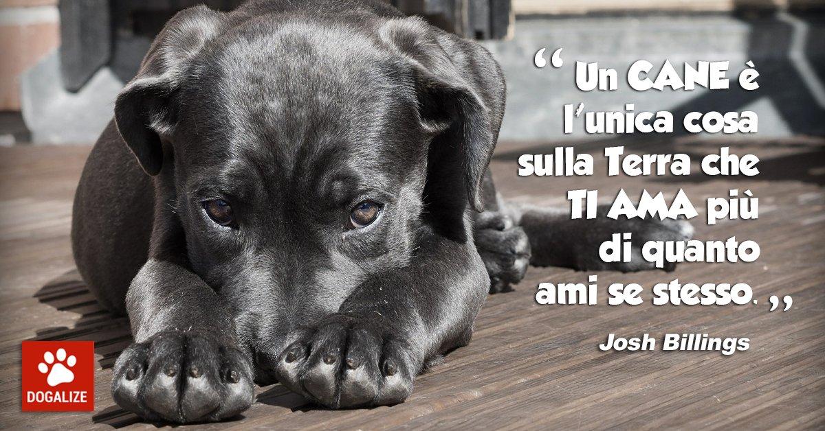 Frasi famose per cani: Billings e l'amore canino, che si dimostra sempre, su Dogalize!