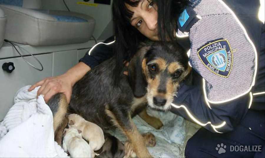 un' agente scelta della polizia, Annamaria Ribezzo, ha salvato una segugia e i suoi 6 cuccioli