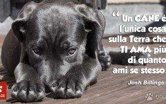 Frasi d'amore per cani frasi cani frasi con cane aforismi cane