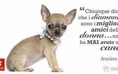 Aforismi di Dogalize: Frasi famose sui nostri amici a quattro zampe, scoprite su dogalize le più belle frasi e aforismi sui cani.