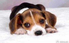 nati i primi cani con fecondazione in vitro.