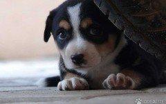 geloso del cane, lo uccide