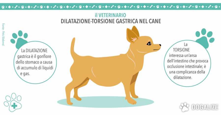 dilatazione gastrica del cane torsione gastrica del cane