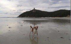 Kuky, il cane che è morto per una malattia sconosciuta ai veterinari che l'hanno curato.