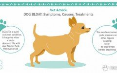 Dog Bloat: Symptoms, Causes, Treatments