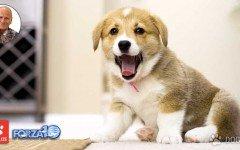 Dott. Sergio Canello: alimentazione e comportamento dei cani