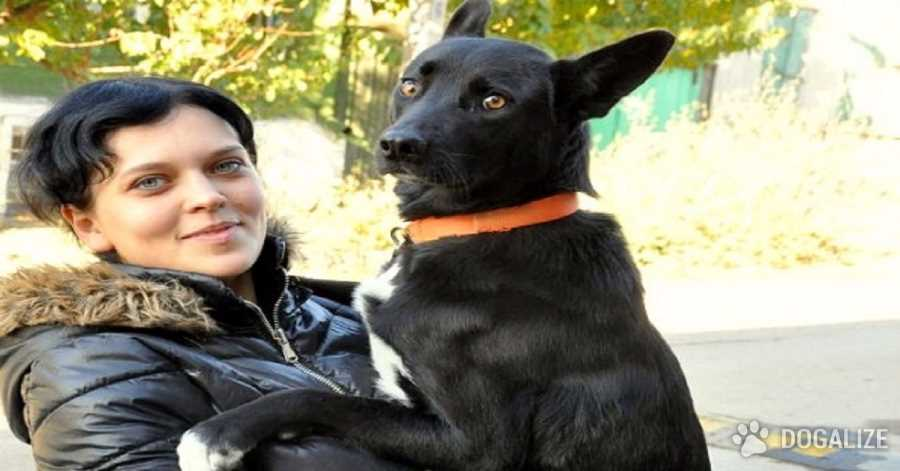 Shiva, the Dog who Walks 200 Miles To Get Back To Rescuer