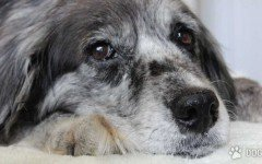 Dog age: do you have a senior dog?