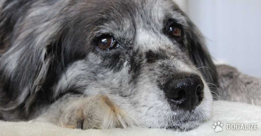 Dog age: do you have a senior dog?
