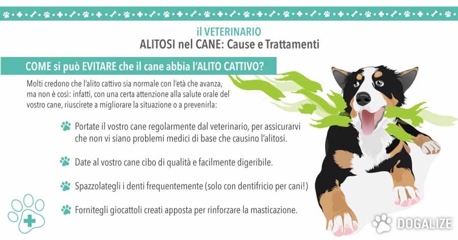 Alitosi nel cane: scopri quali sono le cause e i trattamenti