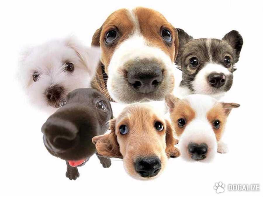 Cani sentono emozioni umane