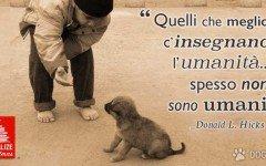 Quelli che meglio ci insegnano l'umanità spesso non sono umani