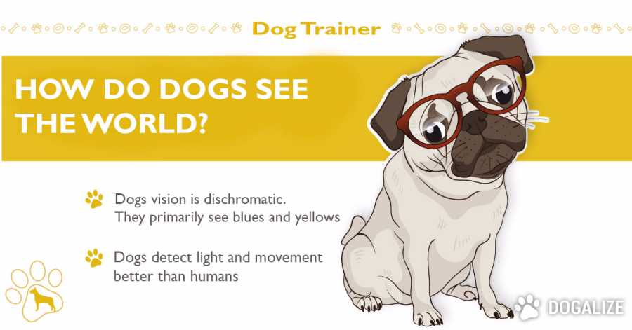 Dog view: How Do Dogs See The World?