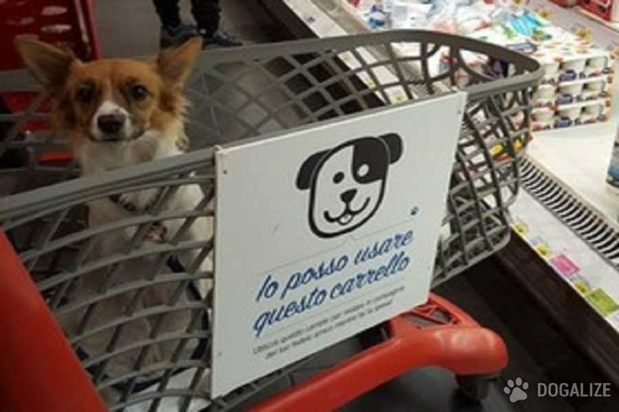 """Cani ammessi al supermercato: un importante passo avanti"""". Lo ha detto nelle scorse settimane l'on. Michela Vittoria Brambilla"""