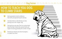 How To Teach Your Dog To Climb Stairs