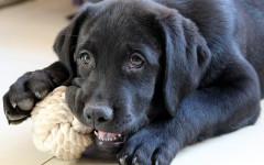 Educare cane attraverso il gioco, non con la paura!