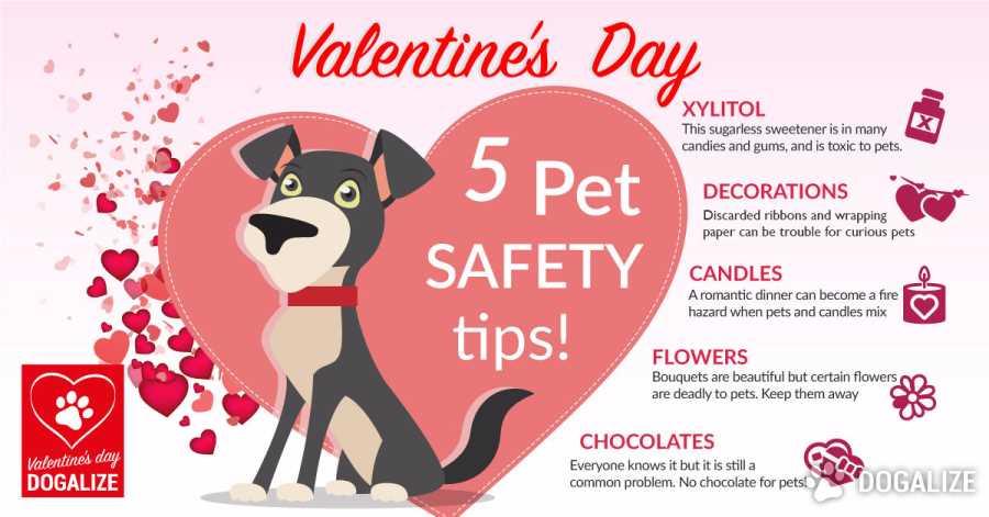 Valentine's Day Pet Safety Tips - Dogalize