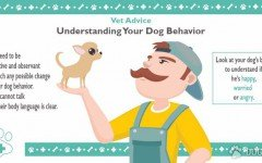 Vet advice: Understanding Your Dog Behavior