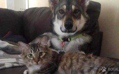 Il gatto da adottare? Lo sceglie...il cane!