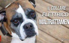 Il collare elettrico per cani è maltrattamento