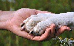 ansia di separazione del cane