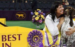 Westminster Kennel